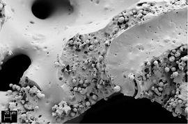 SEM image of a calcium carbonate containing PU-foam