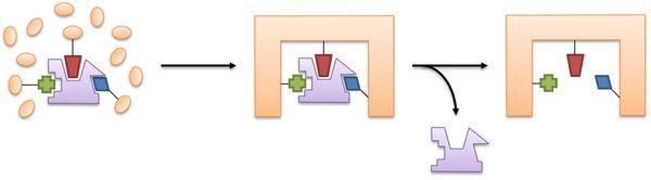 Molecular Imprinting
