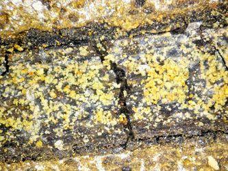 Mikroskopische Aufnahme in 200 facher Vergrößerung der Korrosion durch Desulfovibrio vulgaris.