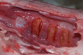 Soft tissue adhesive